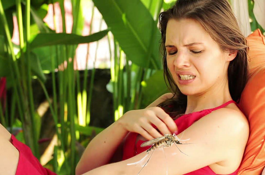 Photo of मच्छर पसंदीदा गंध वाले मनुष्य का खून ज्यादा पीते हैं, सबका नहीं