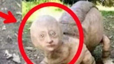 Photo of भारत में दिखे 12 से ज्यादा एलियन, डरावनी आंखें देखकर कांप गए लोग !