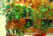 Photo of वास्तु उपाय : तुलसी का पौधा घर की नकारात्मक ऊर्जा को कर देता है दूर
