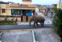 Photo of VIDEO : भानियावाला में घुस गया हाथी, लोगों में दहशत का माहौल