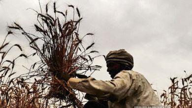 Photo of किसानों के लिए खुशखबरी, इस तरह खुद रजिस्ट्रेशन कर पा सकेगें 6000 रुपए