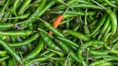Photo of हरी मिर्च के फायदे जानकर हैरान रह जाएंगे आप, कई रोगो में है मददगार