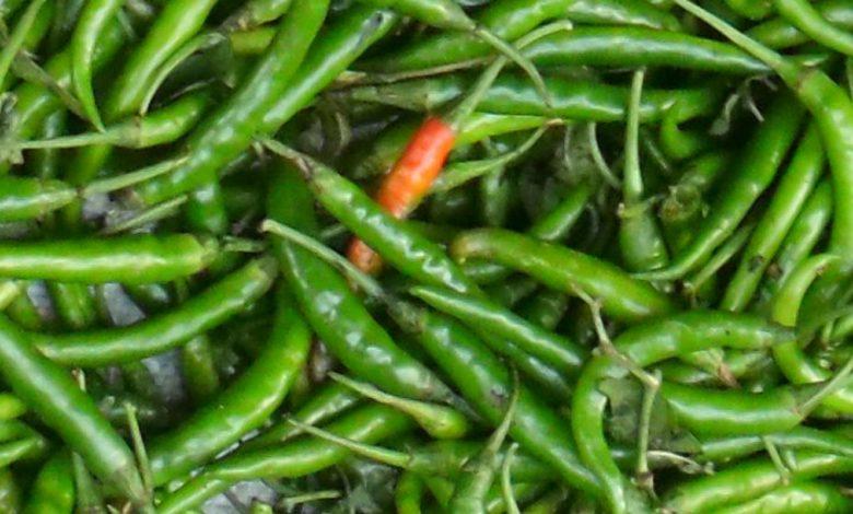 हरी मिर्च