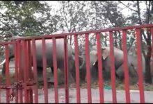 Photo of जंगली हाथियों का झुंड जंगलों से सड़कों पर उतरा, लोग खौफ में