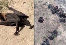 Photo of कोरोना से नहीं बल्कि इस बड़ी वजह से हुई थी पूर्वी उत्तर प्रदेश में चमगादड़ों की मौत