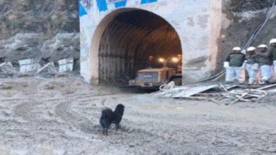 Photo of Video : तपोवन टनल के बाहर किसका इंतज़ार कर रहा है ये कुत्ता