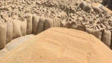 Photo of यूपी में न्यूनतम समर्थन मूल्य योजना के तहत कुल 56.39 लाख मी0टन गेहूँ की हुई खरीद, 1297829 किसान हुए लाभान्वित