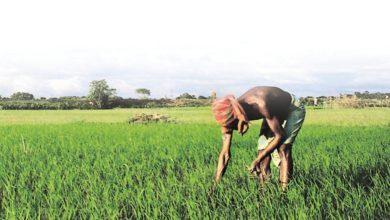 Photo of किसानों की आय में वृद्धि के लिए यूपी सरकार कृतसंकल्पित