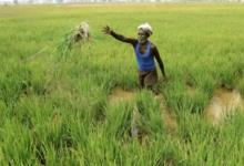 Photo of प्रदेश के किसानों को अब तक कुल 398949.23 करोड़ रू के फसली ऋण का वितरण सुनिश्चित