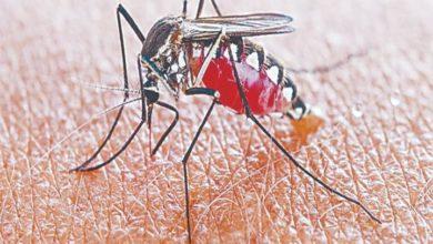 Photo of कानपुर के गांव में डेंगू और बुखार से पसरा मातम, पंद्रह दिन में 10 लोगों की मौत